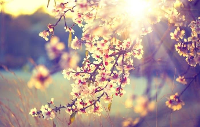 Koje cvijeće najviše volite?