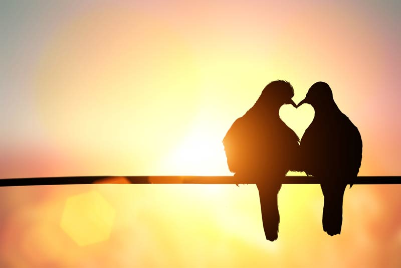 Zaljubljenost se lako uoči